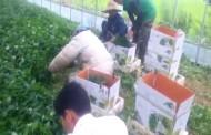 कोरिया रोजगारप्रति आकर्षण