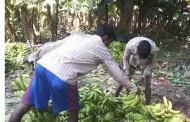 बन्द हड्ताल गरी भारतसँग मागेर जनताले अधिकार पाउनेवाला छैनन् – मधेसका किसान